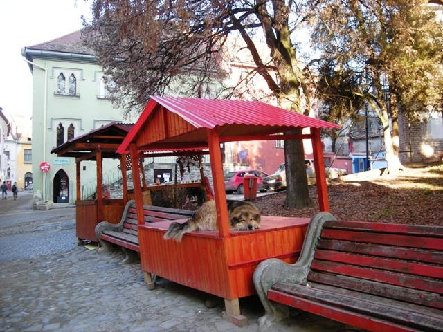 romenia-siguisoara-73