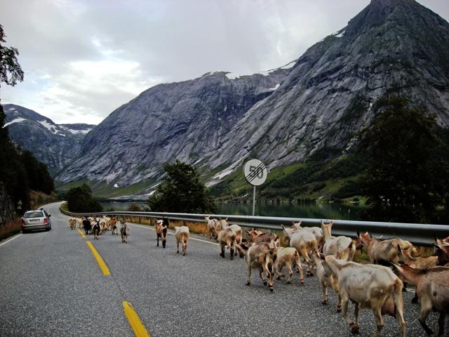 Noruega-12